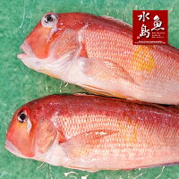 【送料無料】新潟産天然甘鯛アマダイ(グジ)800〜899g・2尾(生冷凍)
