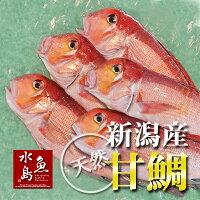 【送料無料】新潟産天然甘鯛アマダイ(グジ)200〜299g・5尾(生冷凍)