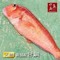 新潟産天然甘鯛アマダイ(グジ)700〜799g(生冷凍)