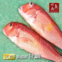 【送料無料】新潟産天然甘鯛アマダイ(グジ)900〜999g・2尾(生冷凍)