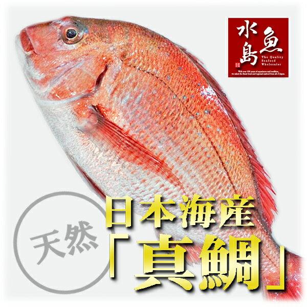 天然真鯛 マダイ 桜鯛 日本海産 2.0~2.4キロ物