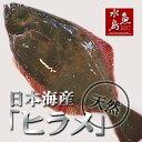 【送料無料】天然ヒラメ 平目 日本海産 4.0〜4.4キロ物