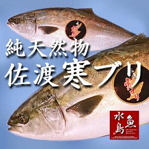 天然 寒ブリ「佐渡 寒ぶり」3k...