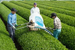 2019年新茶予約日本茶緑茶八女茶定庵しあわせ100g茶葉煎茶八女茶深蒸し茶茶高級おみあげ贈答内祝プレゼントポイント消化
