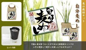 【育てて!食べよう!】自分麦めし栽培セット×2個セット