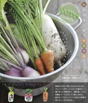 【育てて!食べよう!】【代引手数料無料!】自分野菜3種栽培セット
