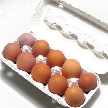 小笠原農場 有精卵 10個 6パック