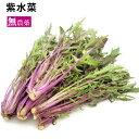 紫水菜 千葉県産 無農薬栽培 1把