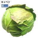 キャベツ 低農薬栽培 1玉