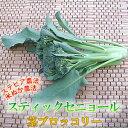 【11月より収獲予定】茎まで食べれる美味しいブロッコリースティックセニョール1束150gビタミン...