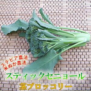 茎まで食べれる美味しいブロッコリースティックセニョール1束150gビタミン豊富で体も元気!!茎...