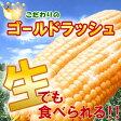 【7中頃から8月末前後で順次発送予定】過去の最高糖度24度!幻の極甘トウモロコシ!本当はちょっと高価なステビア農産物のゴールドラッュのとうもろこし1.5kg