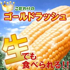 【7中頃前後で発送予定】去年の最高糖度24度!幻の極甘トウモロコシ!本当はちょっと高価なステビア農産物のゴールドラッュのとうもろこし1.5kg