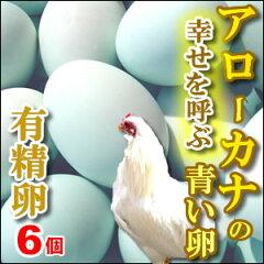 インディオ達の間で今でも「幸せを運ぶ鳥」と言われるアローカナ世にも美しい青い卵も平飼い鶏...