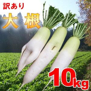 収穫後すぐに発送!おでんやサラダに最適な無選別大根10kgステビア・米ぬか農法で瑞々しく甘み...