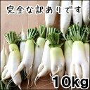 (2019年4月末より発送予定)ステビア・米ぬか農法の瑞々しい訳あり大根10kg【千葉県産】