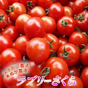 可愛らしいミニトマト「ラブリーさくら」300gデザート感覚で食べられちゃう♪可愛らしい真っ赤...