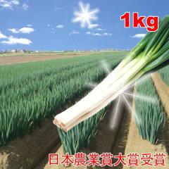 【日本農業賞大賞受賞】イチオシ「ねぎ」1kg海近の畑で育つネギは一味違う!ミネラル豊富なサラ...