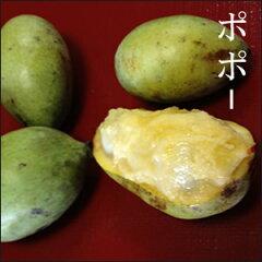 【予約】クリーミーな味!南国系の香りをただよわせる栄養価の高い幻の果物【予約】 木になる...