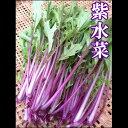 赤軸色した珍しい「紫水菜」「赤水菜」150g