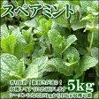 【5月より発送】癒しのハーブ類爽やかな香りがモヒートにオススメ♪茎ごとスペアミント5kg