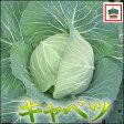 生でも、炒めても、煮込んでも美味しい使える野菜キャベツ1玉