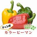 【千葉県産】大きい!肉厚!きれ〜い♪カラフルジャンボカラーピーマン1個パプリカ赤・黄・白・...
