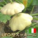 体に嬉しい低カロリー野菜「ズッキーニ」1個土にこだわるステビア農法・米ぬか農法あの絶妙な食感をソテー、グリルやフライに♪イタリアの西洋野菜UFO型ズッキーニ1個