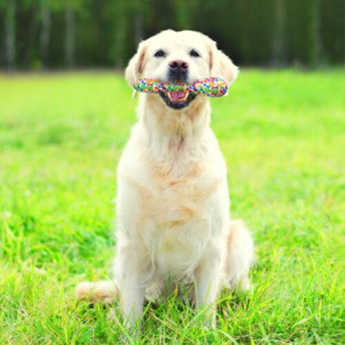 【プラッツ】 ヌーボー スティック Lサイズ 犬用 おもちゃ ドッグトイ スクィーカー 安全素材 丈夫