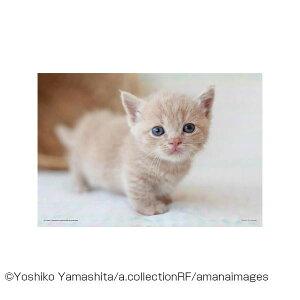 यान्मन आरा पहेली पालतू जानवर एक साथ खेलते हैं (मुंचकिन) 01-2076