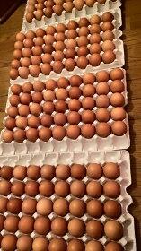 孵化しかけの鶏卵