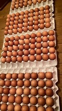孵化しかけの鶏卵 10個 Hot Ga Lon 10qua 【アジアン、エスニック、ベトナム食材、ベトナム食品、ベトナム料理、チリソース】