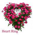 母の日プレゼントギフト花鉢植えつるバラローズ赤薔薇ばら寄せ植え生花ハートリングミニバラななめハート鉢H40No.3おしゃれかわいい人気新月バラ園HITAXフラワーグリーン玄関外庭ピンク赤レッド20代30代40代50代60代