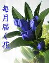お花の定期便 毎月届く花■花便り3か月コース■3か月間毎月花