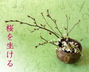 生け花セット■いけばなキット・3か月コース■3月は桜の生け花 生け花はじめてセット 毎月届く花 初心者向け生け花セット 華道セット材料 フラワーサブスクリプション【送料無料 生花】和の花
