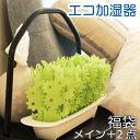 ミスティーガーデン2nd プラス2点 卓上加湿器 自然気化式 加湿器 エコロジー エコ加湿器 福袋 ...
