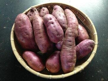 【送料無料】西山ファミリー農園 酵素紫芋(パープルスイートロード) 4Kgさつまいも/サツマイモ/お取り寄せ/通販/お土産/お祝い/お年賀/御年賀/