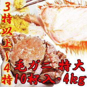 【送料無料】特選 堅ガニ浜茹で毛ガニ食べ放題セット徳用10杯入(約4キロ)【代引き不可】ケガニ…