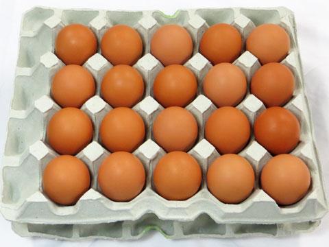 《プレミアム市場》【送料無料】島根県 生卵 しまづの「こだわり」卵(赤卵40個入り) 【代引き不可】贈答用/濃厚/高級たまご/新鮮たまご/卵かけご飯/純国産鶏/もみじ/お取り寄せ/通販/お土産/ギフト/敬老の日/