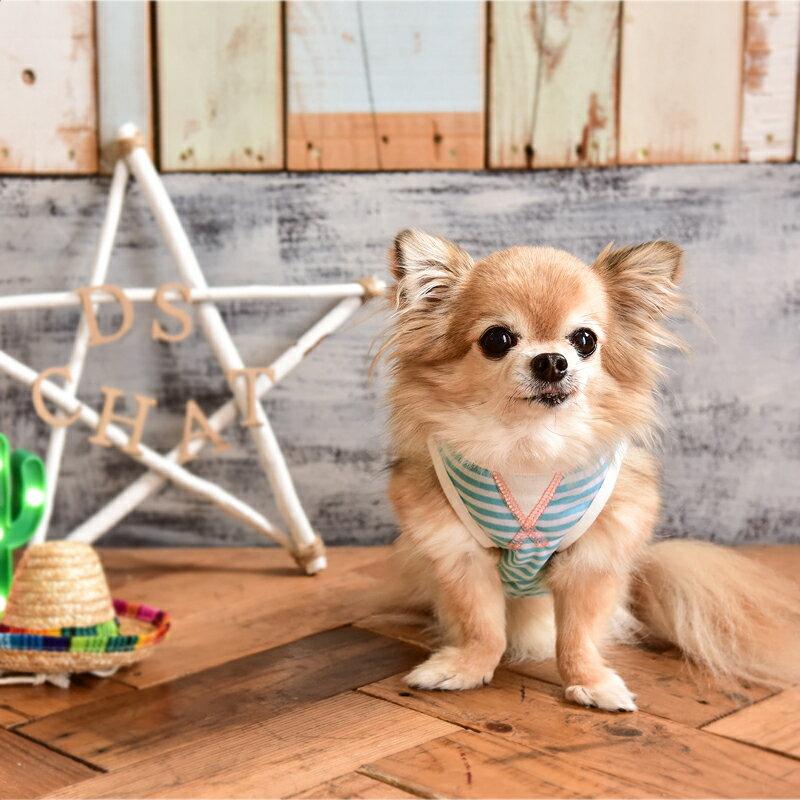メキシカンボーダータンクトップオレンジ / ブルー4L / 5L / 6Lサイズ中型犬 / アメリカンコッカー / 柴犬 / ボーダーコリーD's CHAT / ディーズチャット犬服 / 犬の服 / ドッグウェア春夏コレクション