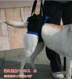 歩行補助ハーネス(後足用) M(胴周り49-63cm)介護用 【ウォークアバウト】 ペット 介護用品 老犬 高齢犬 わんケア 【犬用介護用品】ペットグッズ 後肢 後脚 犬 歩行補助 ハーネス