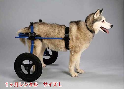 【1カ月レンタル延長】犬の車椅子 K9カートスタンダード後脚サポート L(18〜30kg)用 ラブラドール シェパード バーニーズ【介護用品】 わんケア 犬用 車椅子 車いす カート【大型犬用車椅子】 バギー 後肢 後足 歩行器 レンタル 犬