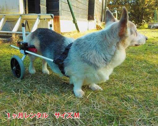 【1カ月レンタル延長】犬の車椅子 K9カートスタンダード後脚サポート M(11.1〜18kg)用 介護用品 老犬 高齢犬 わんケア 犬用 車椅子 車いす カート 中型犬 車椅子 バギー 後肢 後足 歩行器  コーギー ビーグル