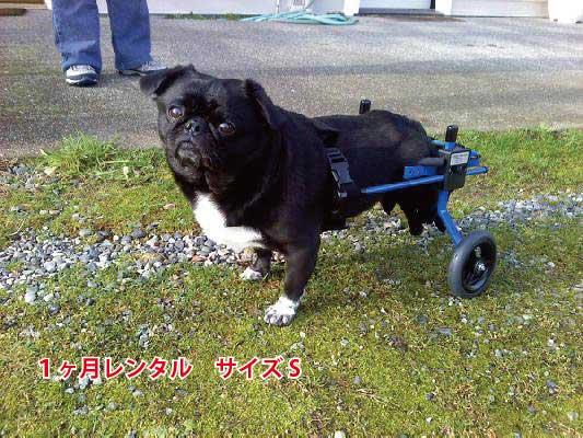 【1カ月レンタル延長】犬の車椅子 K9カート スタンダード 後脚サポート S(5.1〜11kg)用 パグ ポメラニアン【介護用品】 老犬 高齢犬 小型犬 車椅子 バギー 犬用 車椅子 車いす カート 後肢 後足 歩行器  犬 レンタル 歩行 補助 ペット