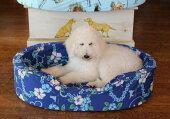 中型犬用のベッド(〜25kg位)オーソペディックカドラー中身&カバーセット(L)【ベッド・カドラーペット日本製大型犬小型犬多頭飼い安眠リラックス】