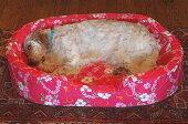大きいベッドXLサイズ中身とカバー(替えカバー2枚付き)セットなみなみウレタンの介護老犬子犬日本製XLサイズ
