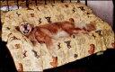 【国内送料無料】オリジナル・マルチカバーベッドカバー【150cm×200cm】 【犬グッズ 犬雑貨】【犬 カバー 敷き物】fs3gm