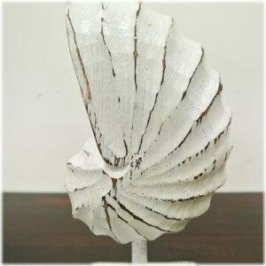 白いオウム貝のスタンドオブジェ