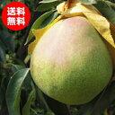 【送料無料】9月中旬頃出荷予定☆大玉洋梨フレミッシュ・ビュー...