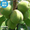青森県産青梅 Lサイズ 1kg(品種:豊後梅)【クール便送料無料】